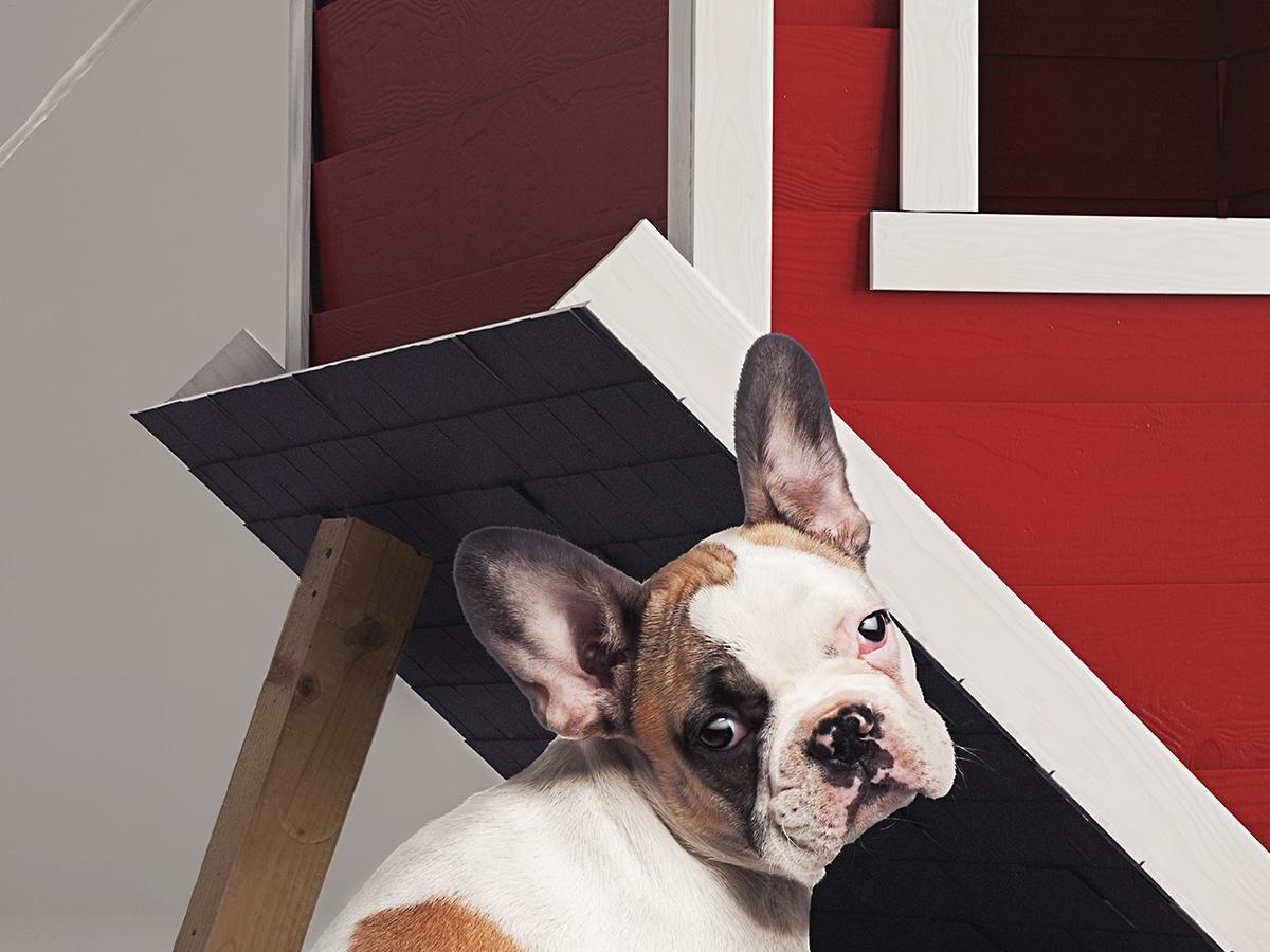 ArchIng CGI Postproduction Retouching Digital Art Dog Hundehütte